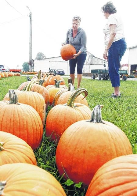 Angie Cates, left, and her mom, Connie Bensman, both of Anna, pick out pumpkins for house decorations at Crossway Farms Tuesday, Sept. 19.