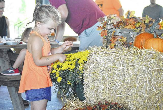 Emma Davis, 4, of Houston, daughter of Abby Niekamp and John Davis, works to capture a lady bug climbing on a mum plant at New Bremen Pumpkinfest Saturday, Sept. 23.