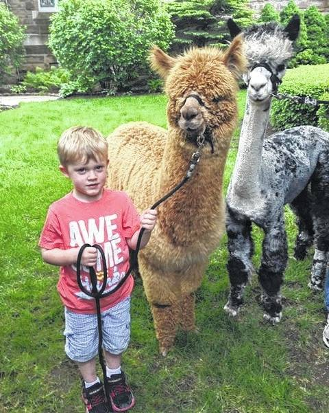 Clifton Ernst, son of Doug and Amanda Ernst, is shown with alpacas Zeke and Abednigo.
