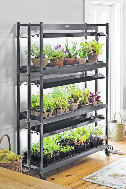 Using a combination of artificial and natural light helps plants better tolerate the less-than-ideal indoor growing environment.