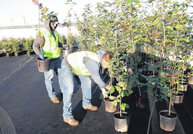City of Sidney employees Mike Siegel, left, of Fort Loramie, and Derek Richards, of Sidney, move plants that were delivered to the City of Sidney's service center on Vandemark Road Thursday, Oct. 26. The trees were purchased during the city's tree sale.