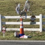 'Cone Weed' gets Christmas makeover