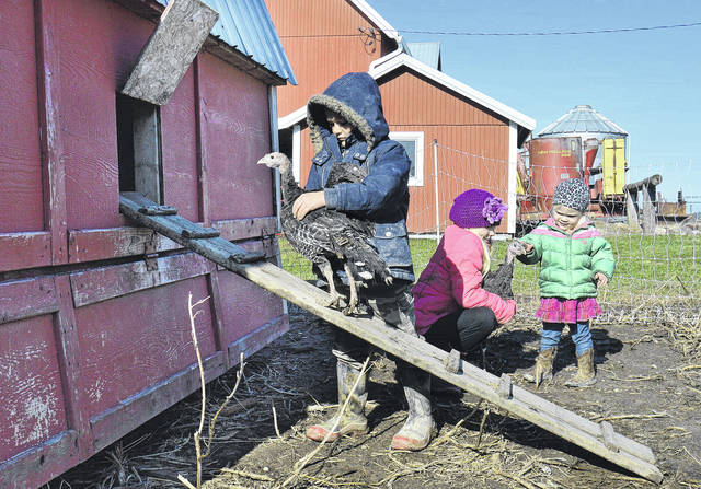 Rounding up turkeys in their backyard Monday, Nov. 20 are, left to right, Ignatius Schulze, 7, Marie Schulze, 8, and Virginia Schulze, 2, all of Russia, all children of Brent and Beth Schulze. The kids are part of a family that raises Heritage animals on their farm.