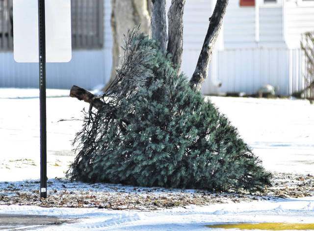 While many people leave their Christmas trees up for a week or more after Christmas one person was on top of things and had their tree sitting on the curb of Northwood Street Wednesday, Dec. 27.