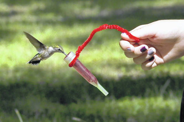 A visitor to Lake Hope State Park near McArthur feeds a hummingbird. The program is open to the public through Labor Day.