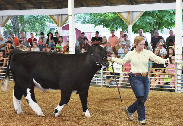 Jenna Barlage, 17, of Fort Loramie, daughter of Brian and Denise Barlage, shows her market steer despite having a broken wrist at the fair Tuesday, July 24.
