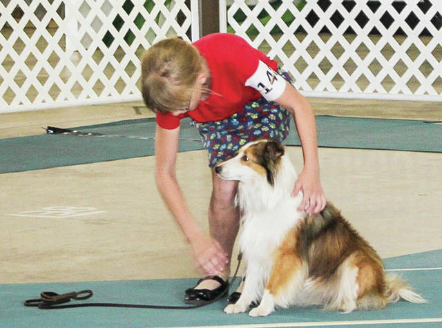 """Lindsey Thornhill, 11, of Anna, daughter of Ron and Carin Thornhill, shows her 4-year-old sheltie """" Daisey,"""" during the Junior Fair dog show Saturday, July 28."""