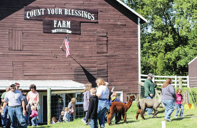 People walk Alpacas at Count Your Blessings Alpacas Saturday, Sept. 29.